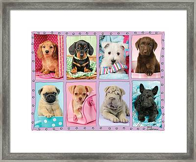 New Puppy Multipic Framed Print by Greg Cuddiford