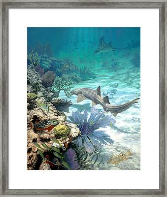 New Reef Framed Print by Don  Ray