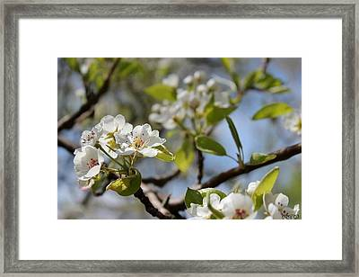New Spring Beginnings Framed Print by Brittany Danko