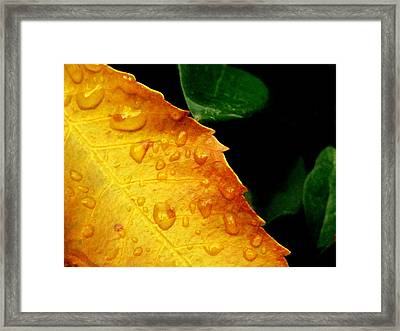 New Sunset Colour Framed Print by Jhoy E Meade