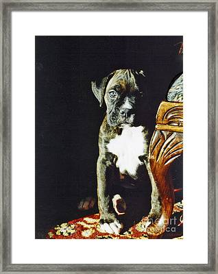 New To The World Framed Print by Judy Wood