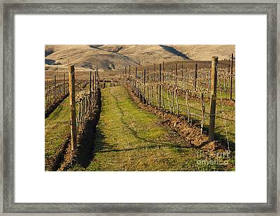 New Vines Framed Print by Mike  Dawson