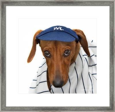 New York Yankee Hotdog Framed Print by Susan Candelario