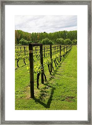New Zealand, South Island, Nelson, Wine Framed Print by Lee Foster