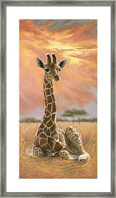 Newborn Giraffe Framed Print by Lucie Bilodeau
