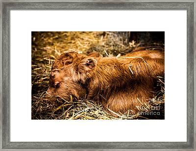 Newborn Nap Framed Print by Sue OConnor