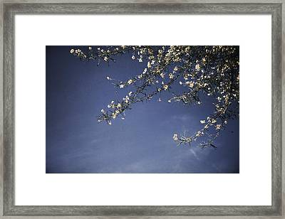 Next Time I'll Be Sweeter Framed Print by Laurie Search