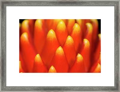 Nidularium 'fireball' Abstract Framed Print by Nigel Downer