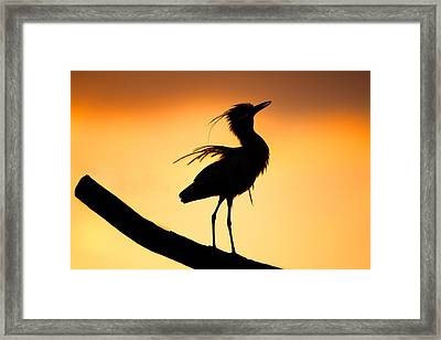 Night Heron Silhouette 2 Framed Print by Andres Leon