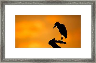 Night Heron Silhouette Framed Print by Andres Leon