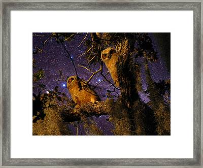 Night Owls Framed Print by Phil Penne