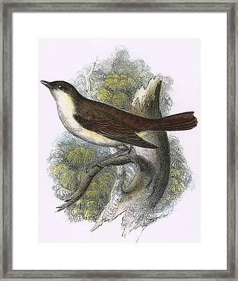 Nightingale Framed Print by English School