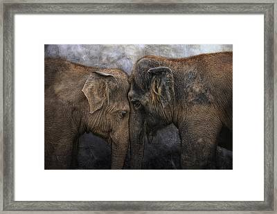 Nighty Night Darling Framed Print by Joachim G Pinkawa