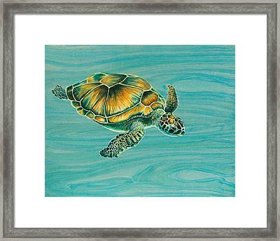 Nik's Turtle Framed Print by Emily Brantley