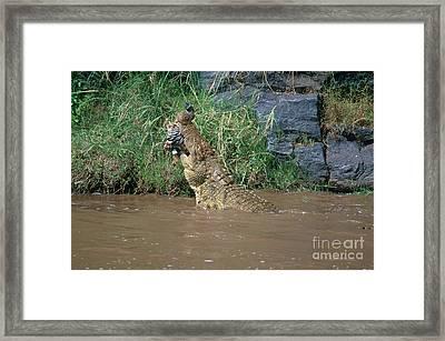 Nile Crocodile Framed Print by Art Wolfe