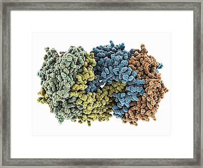 Nitrogen-fixing Molybdenum Iron Enzyme Framed Print by Science Photo Library