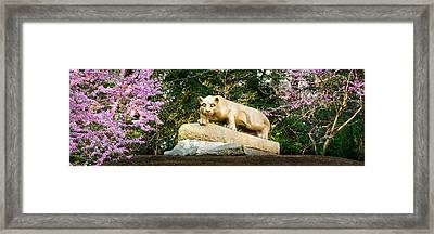 Nittany Lion In Springtime Panorama Framed Print by William Ames
