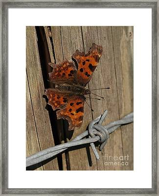 No Barriers For A Butterfly Framed Print by Elizabeth Debenham