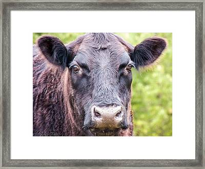 No Bull Framed Print by Nancy  Pillers