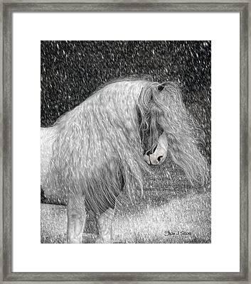 Nor Easter Framed Print by Fran J Scott