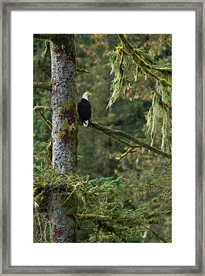 North America, Usa Alaska, Baranof Framed Print by Joe and Mary Ann Mcdonald