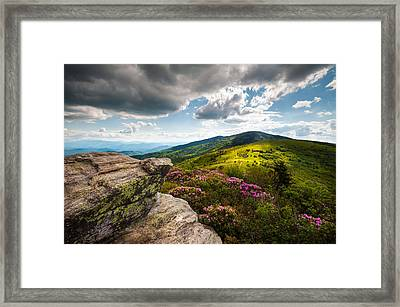 North Carolina Blue Ridge Mountains Roan Rhododendron Flowers Nc Framed Print by Dave Allen