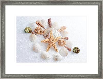North Carolina Sea Shells Framed Print by Andee Design