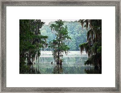 North Florida Cypress Swamp Framed Print by Rich Leighton