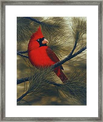 Northern Cardinal Framed Print by Rick Bainbridge