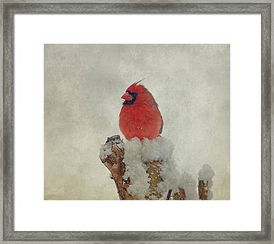 Northern Cardinal Framed Print by Sandy Keeton