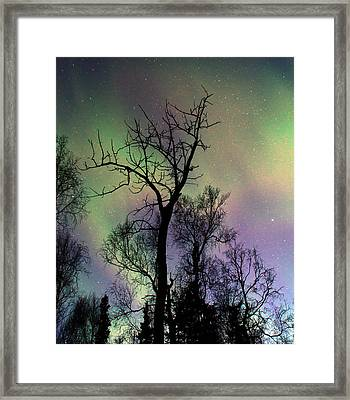 Northern Lights Cottonwood Framed Print by Ron Day