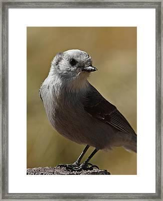 Northern Mockingbird Framed Print by Ernie Echols
