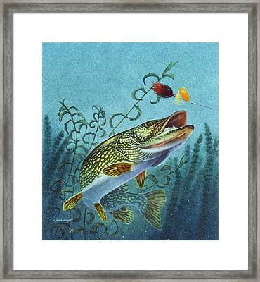 Northern Pike Spinner Bait Framed Print by Jon Q Wright