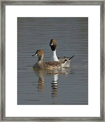 Northern Pintail Pair  Framed Print by Tom Janca