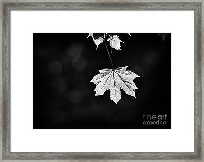 Norway Maple Leaf Monochrome Framed Print by Tim Gainey
