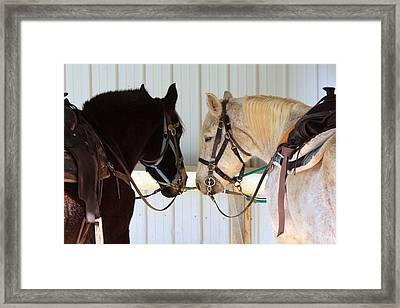 Nose To Nose  Framed Print by Lorna Rogers Photography