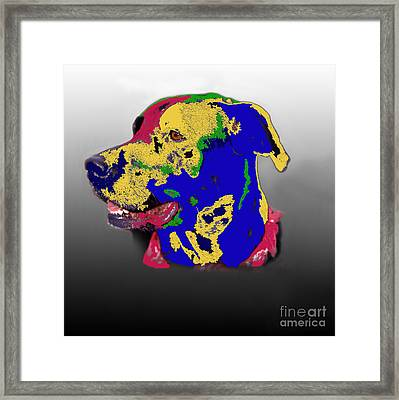 Not A Black Lab Framed Print by Skip Willits