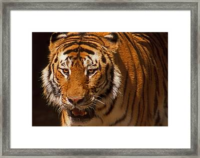 Not Happy Ears Framed Print by Skip Willits