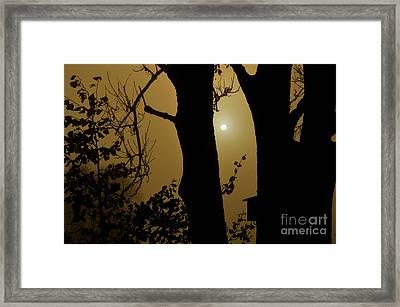 November Fog Framed Print by Susanne Van Hulst