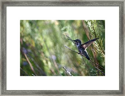 Now You See Me... Framed Print by Wendi Matson