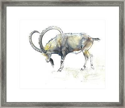 Nubian Ibex Framed Print by Mark Adlington