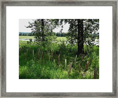 Nurturing Trees To Grow Framed Print by Lizbeth Bostrom
