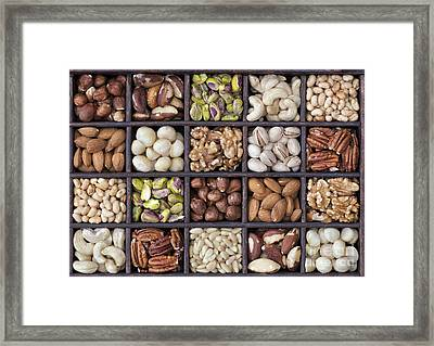 Nuts Framed Print by Tim Gainey