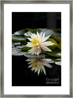 Nymphaea Maria And Reflection Framed Print by Tim Gainey