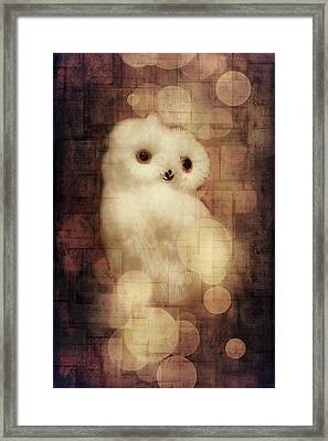 O Owly Night Framed Print by Loriental Photography