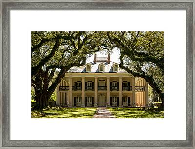 Oak Alley  Framed Print by Alicia Morales