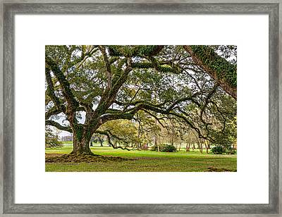 Oak Alley Reverie Framed Print by Steve Harrington