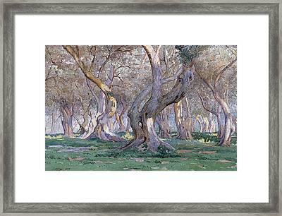 Oak Grove Framed Print by Gunnar Widforss