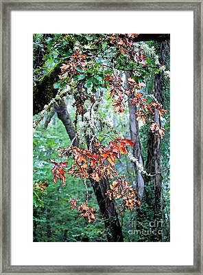Oak Stories Framed Print by Gwyn Newcombe