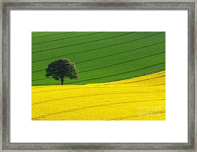 Oak Tree Split Framed Print by Richard Thomas